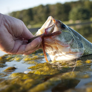 Bass Fishing with Top-Rated Cabela's Products