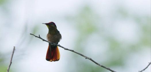https://activejunky-cdn.s3.amazonaws.com/aj-content/birders-hero.jpg