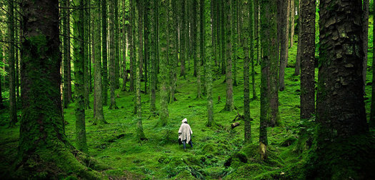 Forest Bathing Growing in Popularity in North America