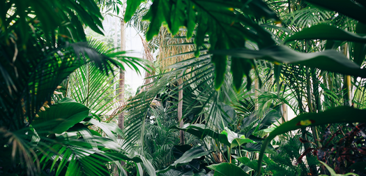 Dubai's Jurassic Park: Hotel recreates a prehistoric rainforest