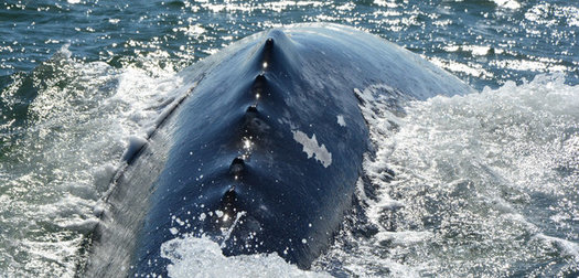 Five Best Whale Watching Tips