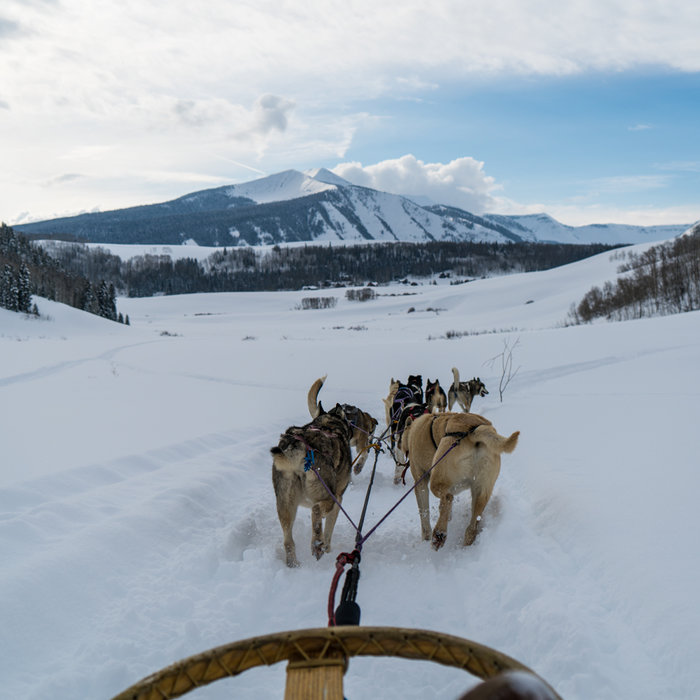 Dog Sledding in 360